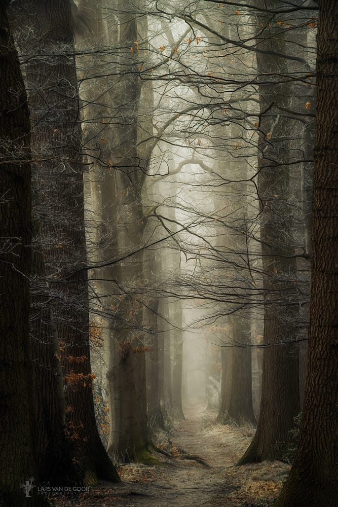 Haunting forest   nature     magical forests   #nature #amazingnature https://biopop.com/
