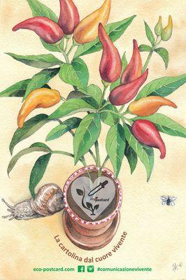 Eco-Postcard - disegnata ad acquerello con pianta di peperoncino