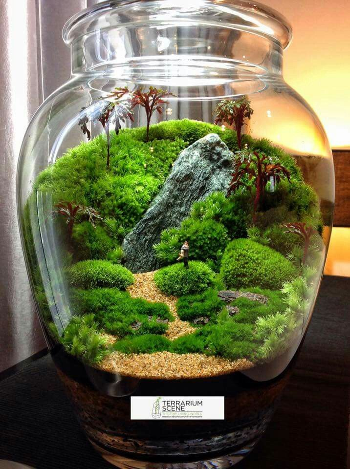 best 25 terrarium ideas on pinterest diy terrarium. Black Bedroom Furniture Sets. Home Design Ideas