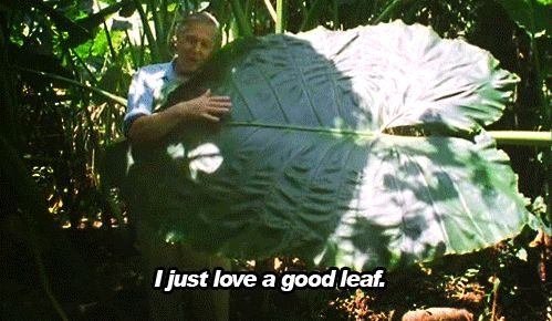 Everything David Attenborough has ever done. | 29 Very Good Reasons To Adore The BBC