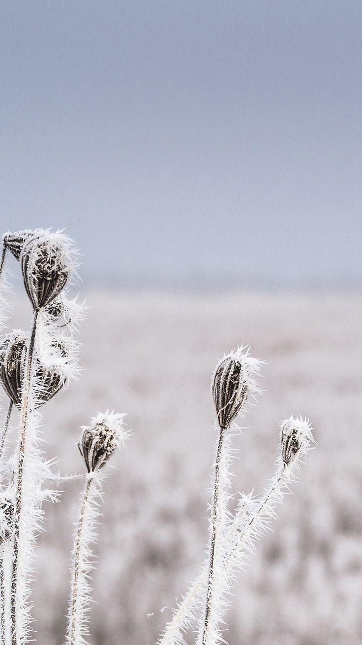 Snow Winter Flower Bokeh Nature iPhone 6 wallpaper
