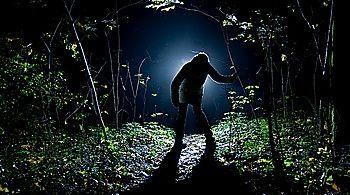 #Siluette #forest  #night