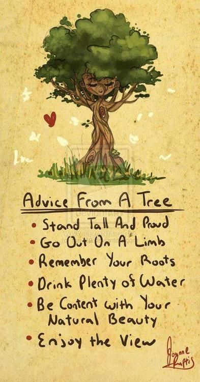 .: Worth Reading, Idea, Trees Advice, Wisdom, Things, Favorite Quotes, Living, Inspiration Quotes, Good Advice