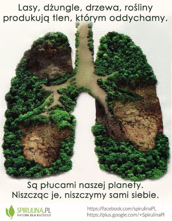 Dbajmy o nasze środowisko. Drzewa są płucami naszej planety. Bez nich sami nie będziemy w stanie oddychać.
