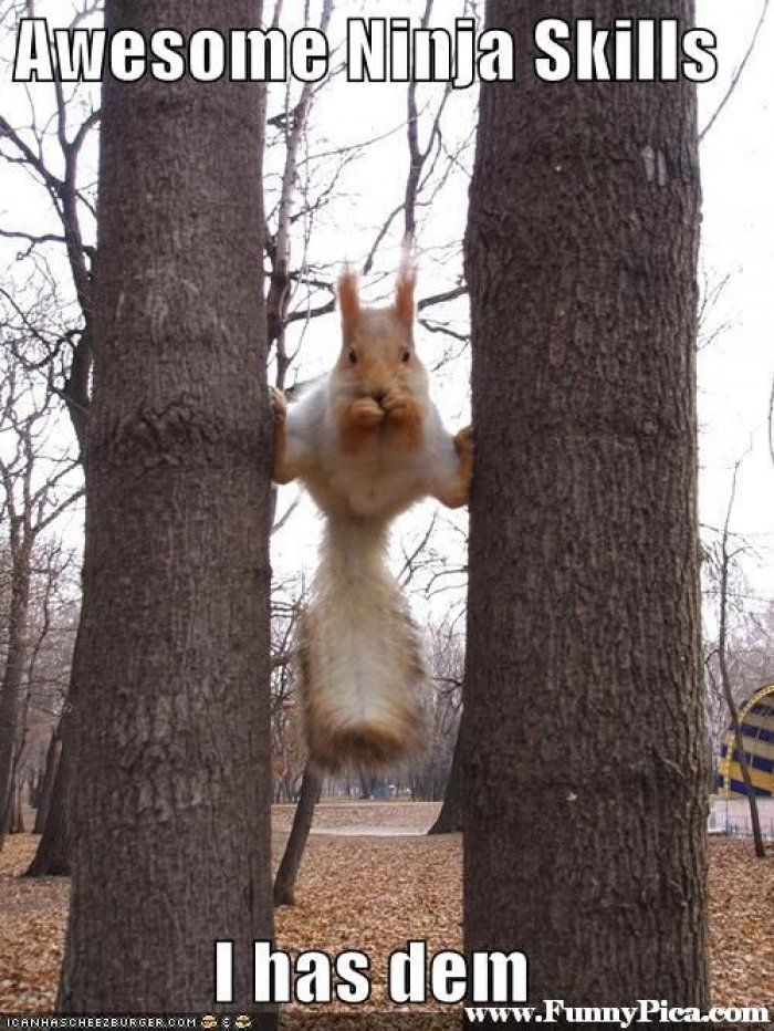 Funny squirrel meme - http://www.jokideo.com/