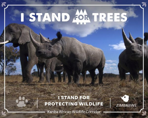 https://s3-us-west-2.amazonaws.com/a.standfortrees.org/certificates/StandForTrees_Kariba_Certificate.jpg