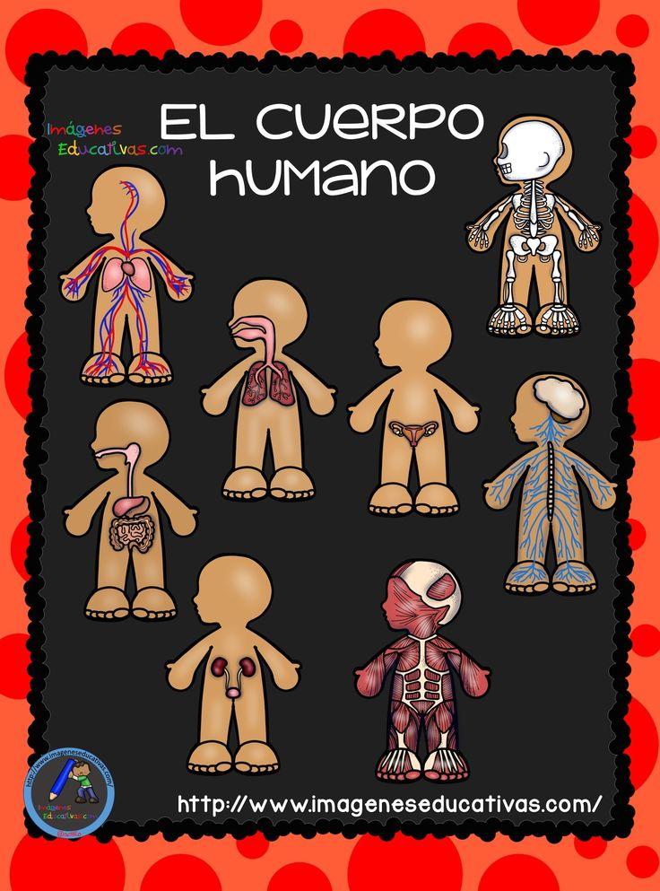 El-Cuerpo-Humano-Aparatos-y-Sistemas-para-Primaria-1.jpg 1,512×2,041 píxeles