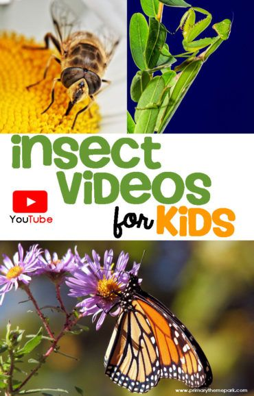 A collection of insect videos for kids that are perfect to include in an insects unit study. They include information on insect traits and specific insects.