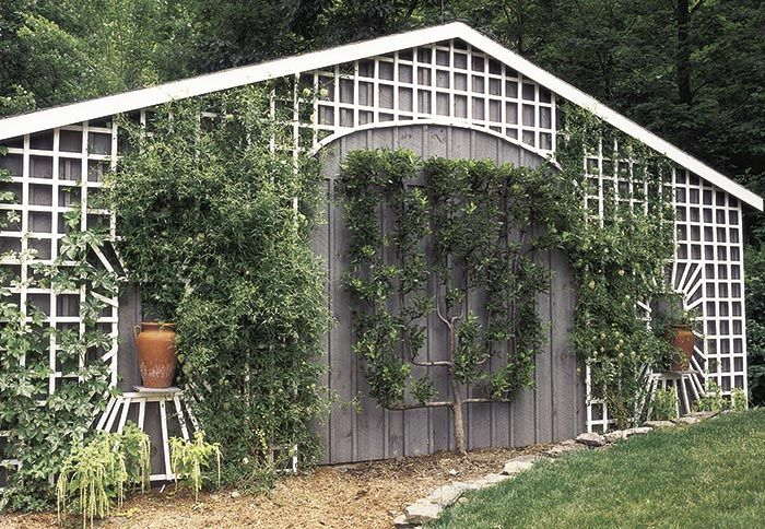 Evergreen Tiered Garden | Lattice And Espalier In Garden | Gardens |  Pinterest | Gardens, Garden Ideas And Small Gardens