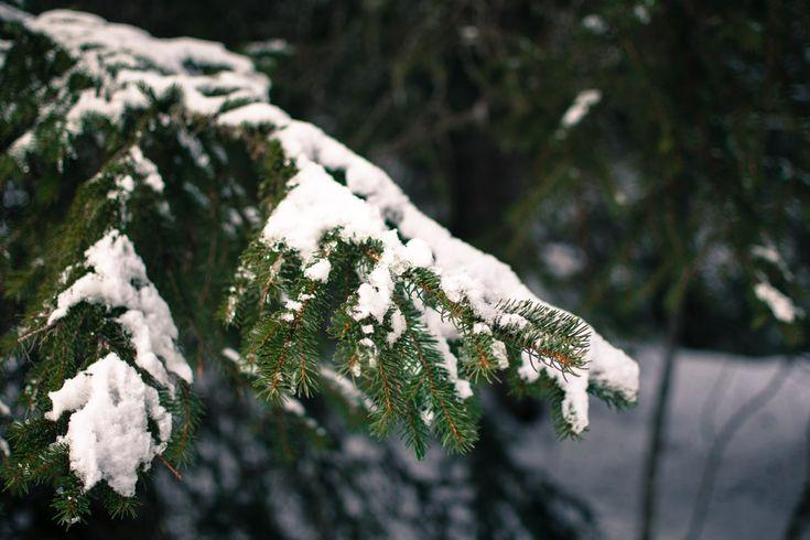 Neige au plateau des glières
