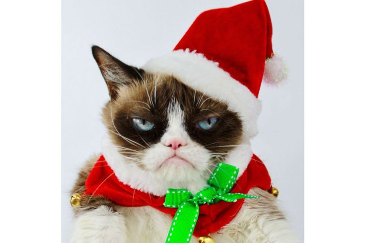 Grumpy Cat, marca del meme del gato gruñón, gana demanda por explotación de su imagen  Redes Sociales  24 Ene 2018 - 11:24 PM  /AFP -- La creación de productos no autorizados con su imagen le dio una razón más para estar de mal humor. Esta sería la primera vez que un meme de Internet consigue una victoria legal, según su abogado.