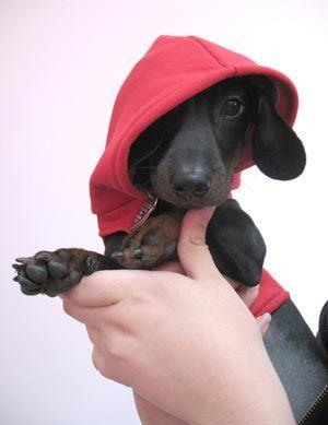 doxie :): Animal Lovers, Doxi, Hoodie Preparation For Halpert, Diy Doggies, Wiener Dogs, Diy Dogs Hoodie, Doggies Hoodie, Dogs Hoodie Patterns, Adorable Animal