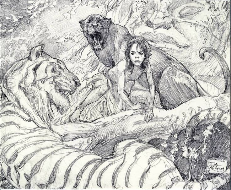 The jungle book by iain mccaig drawing sketches art