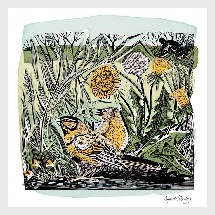 Angela Harding, painting, illustrations, illustration, bird, nature, flowers, wildlife, dandelions, garden, drawing, printmaking, lino, colour