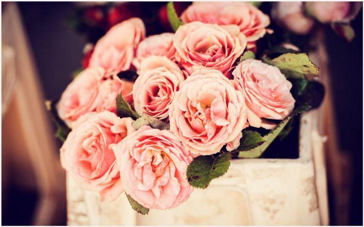 Pink Roses Flowers HD Wallpaper | beautiful pink rose flowers hd wallpapers, pink rose flower hd images, pink rose flower hd wallpaper, pink rose flowers wallpapers, pink rose flowers wallpapers for desktop, pink rose hd wallpaper download, roses-pink-flowers-gifts-bench-mood-hd-wallpaper