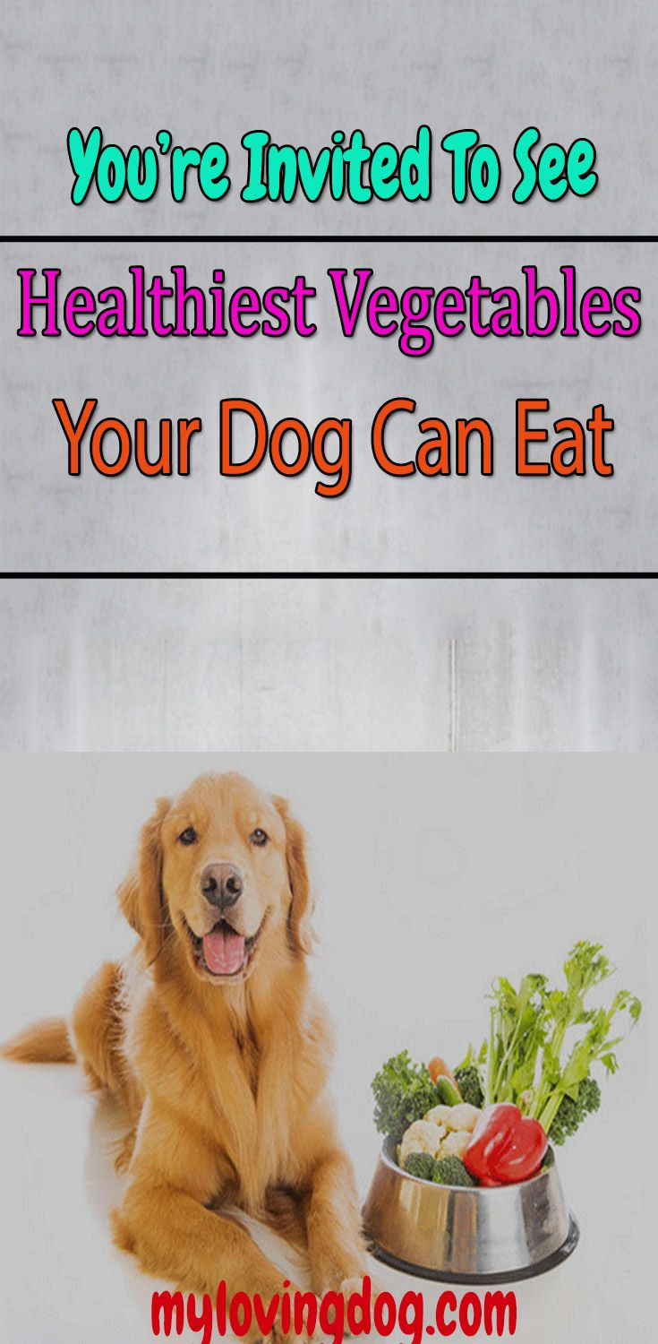 8 Healthiest Vegetables Dogs Can Eat Dog Food Comparison Best