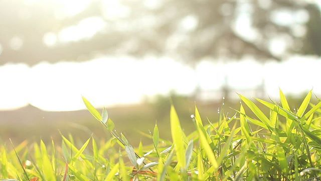 Footage grass autumn  @arya_alfatih  #footage  #videohive #videoblock