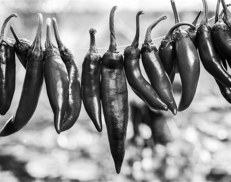 paprika Cambo SC2 4x5 Monorail view camera Schneider-Kreuznach Symmar-S 150mm f/5.6  Fomapan 100 pulled to 50 developed with Ilford LC29 129 20deg 8min  ISO 50 | f16 | 4 second paprika red pepper drying season blackandwhite monochrome 4x5 largeformat film analog schneider cambo fomapan 100 pull 50 lc29 macro closeup bokeh bokehlicious buyfilmnotmegapixels filmisnotdead