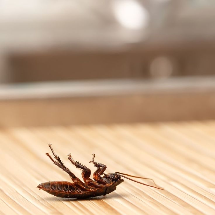 These Cockroach Killers Are The Fastest Way To Get Rid Of