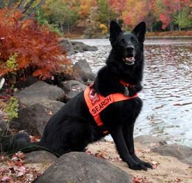 Service Dog Adoption Missouri