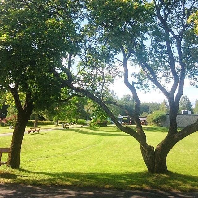 Fint på nebbusvollen. #nebbursvollen#lillestrøm#norge#norway#trær#utebad#grønt#natur#nature