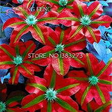Hot Koop 100 stks/partij Mix Mooie Clematis Zaden Bonsai Bloemzaden Diy Thuis Tuin Plant Zeer Gemakkelijk Grow zaad Gratis verzending(China (Mainland))