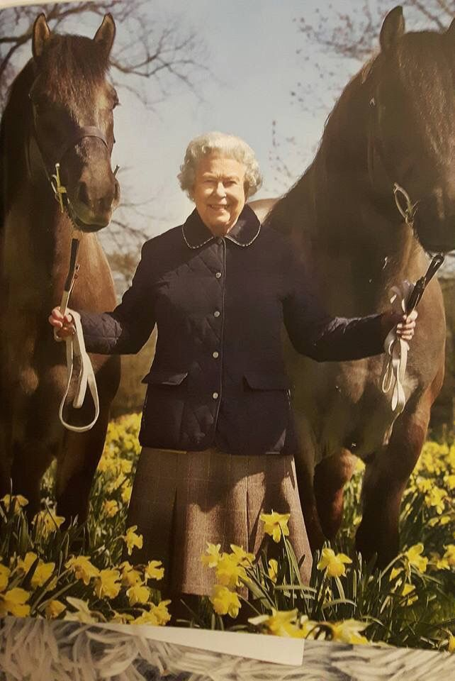 H.M. Queen Elizabeth II with two of her horses at the Sandringham estate stables. C. 2000.