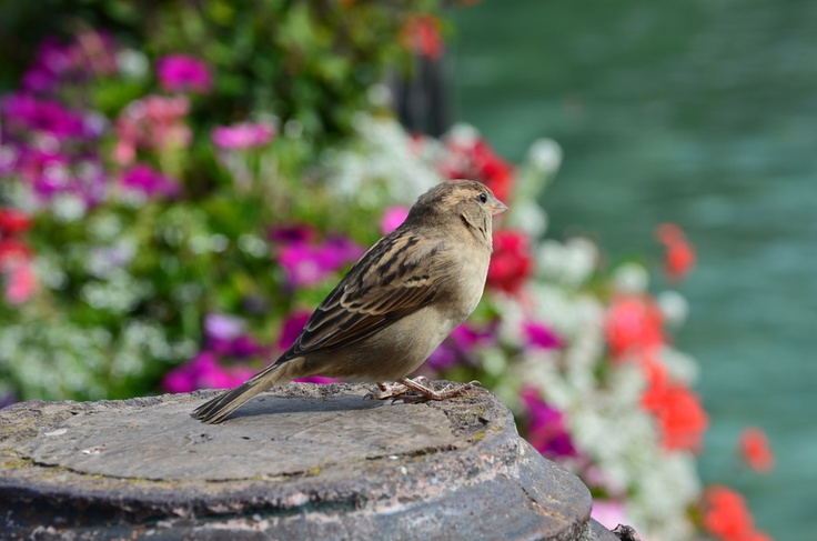 Bird with an incredible view of Lake Annecy