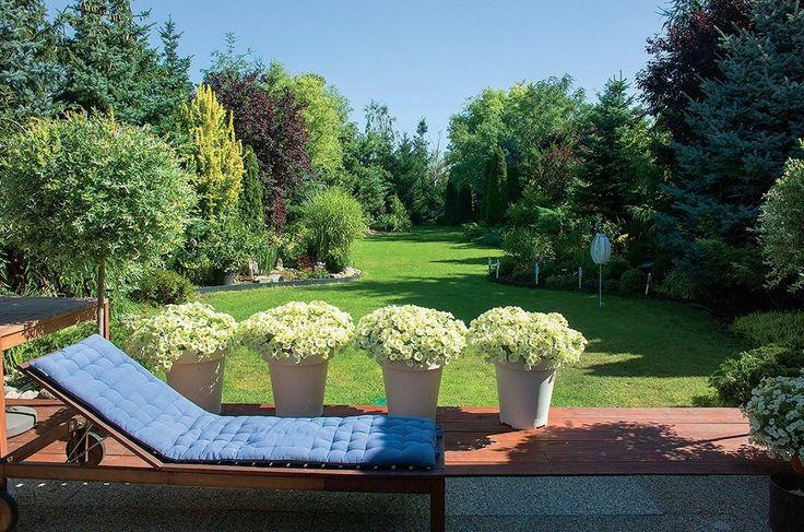 Dnes v záplave letničiek a trvaliek vyzerá záhrada úplne inak.