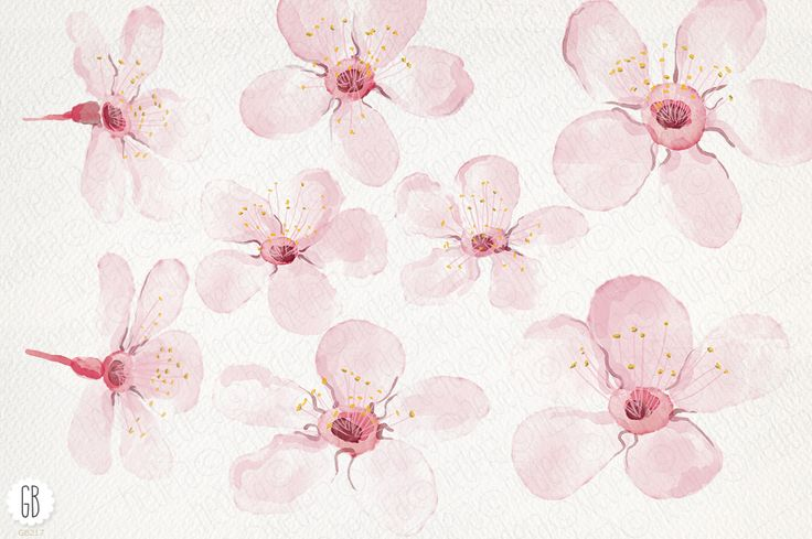 Watercolor cherry blossom, spring by GrafikBoutique on @creativemarket