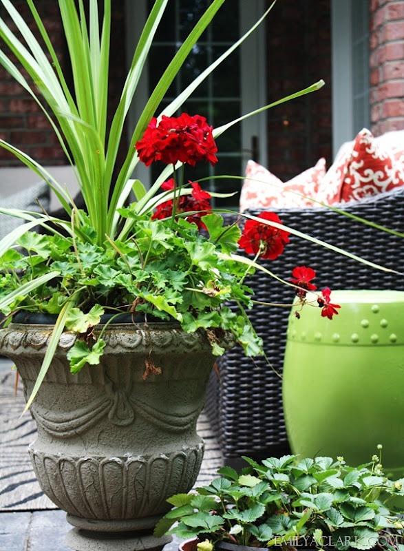 Geranium Pot Idea Outdoor Living Pinterest Geraniums Patio And Pots
