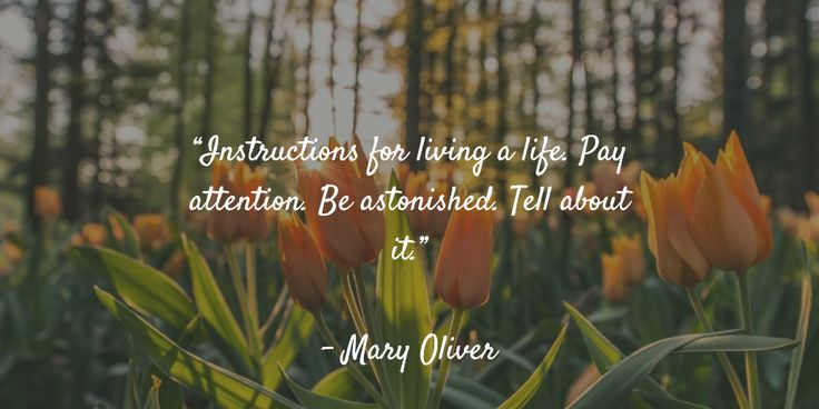 """Instructions for living a life. Pay attention. Be astonished. Tell about it.""   - Mary Oliver"