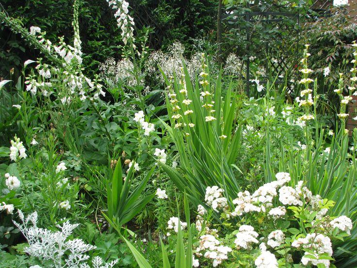 Nancy Steen White garden Parnell Auckland NZ