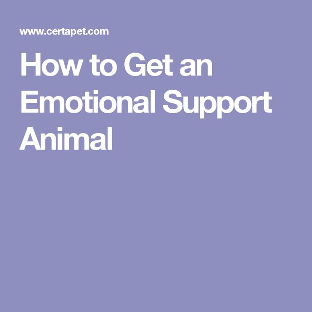 how to get dog designated as an emotional support animal
