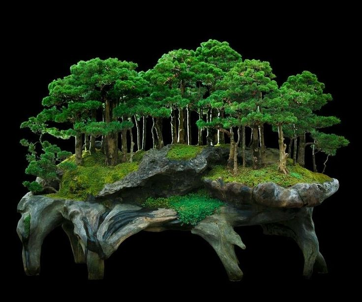 Bonsai monte forest                                                       …