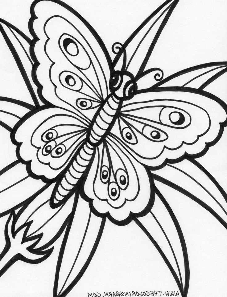 19 Best Coloring Pages Line Drawings Butterflies Images On