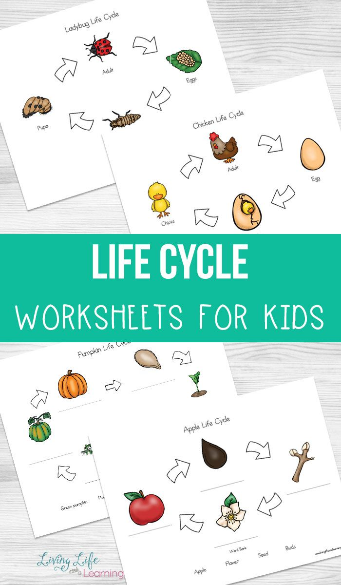 Life Cycle Worksheets For Kids Living Life And Learning Apple Life Cycle Life Cycles Cycle For Kids [ 1200 x 700 Pixel ]
