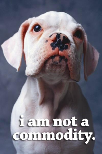 I'm not a commodity! I just want to kiss him!Pitbull Rocks, Animals Enough, Animal Pictures, Animal Enough, Animal Advocacy, Boxers Dogs, Favorite Dogs, White Boxers, Boxers Life