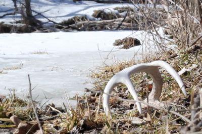 5 small spots to find BIG sheds.  Wiredtohunt.com #sheds #antlers