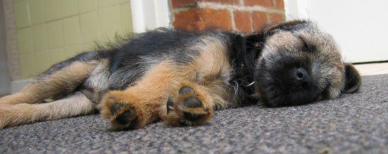 How To Get Urine Smell Off Dog Fur