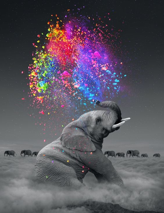 elephant, dreams, dream in color, rainbow... Visit our page here: http://what-do-animals-eat.com/elephants/