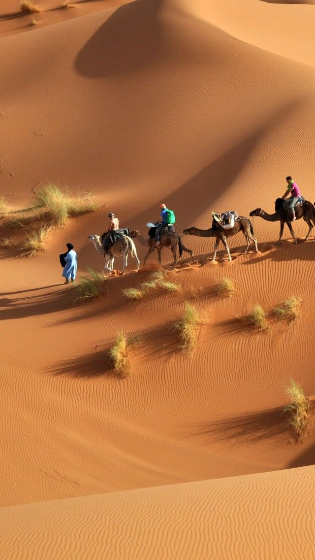 Sahara Camels, Egypt iPhone 5 wallpapers, backgrounds, 640 x 1136