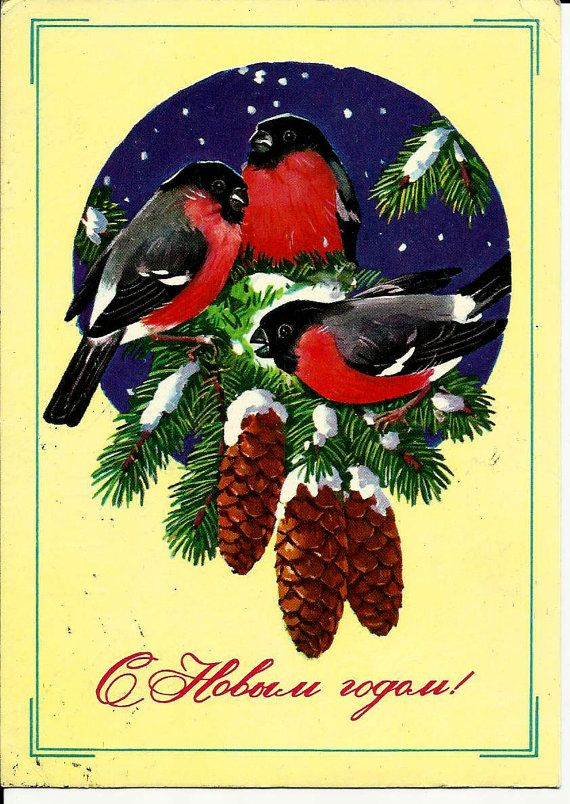 Bullfinch  Birds  Vintage  Russian Postcard Happy by LucyMarket, $3.50