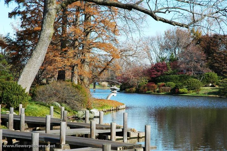 Missouri Botanical Garden. Beautiful of the Japanese garden in the Fall. The cypress trees and maples changed their leaf color.