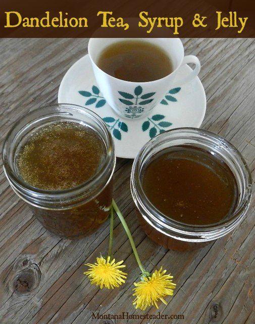 How to make dandelion tea, syrup and jelly    Montana Homesteader