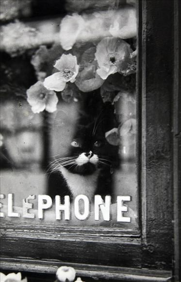 George Brassaï (pseudonym of Gyula Halász) (9 September 1899 – 8 July 1984), Hungarian photographer.