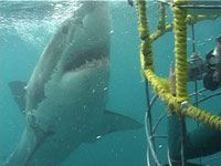 Shark diving in South Africa - top of the bucket list