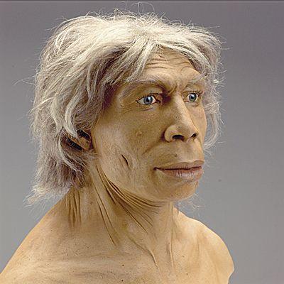 70.H.Neanderthalensis: .Poco faltó para que a los neandertales se los conociera como calpenses, en honor de un cráneo de tipo neandertal hallado en 1848 en la cantera Forbes en Gibraltar: Calpe es el nombre clásico de Gibraltar. Sin embargo, el hallazgo del cráneo gibraltareño precedió en 8 años al de la cueva Feldhofer en el valle del río Neander (Alemania) que dio nombre al popular tipo humano fósil (Neandertal, significa valle del Neander).No son antepasados directos nuestros