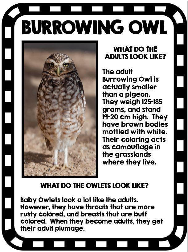 39 Best Owls Images On Pinterest Teaching Ideas Barn