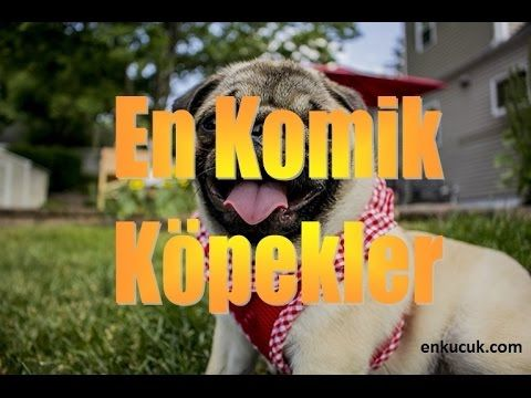 Dünyanın En Komik Köpekleri